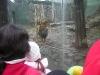 vanocni-zoo-na-kopecku-005